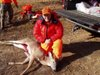 Sota_deer_kill_1